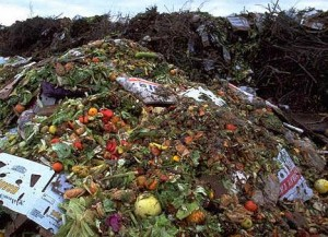 Tons of food waste