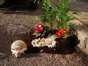 The pothole gardening
